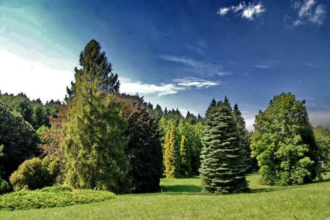 Agostyáni Arborétum, Tata