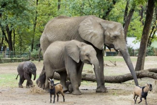 Nyíregyházi Állatpark - Sóstó Zoo, Nyíregyháza (Sóstófürdő)