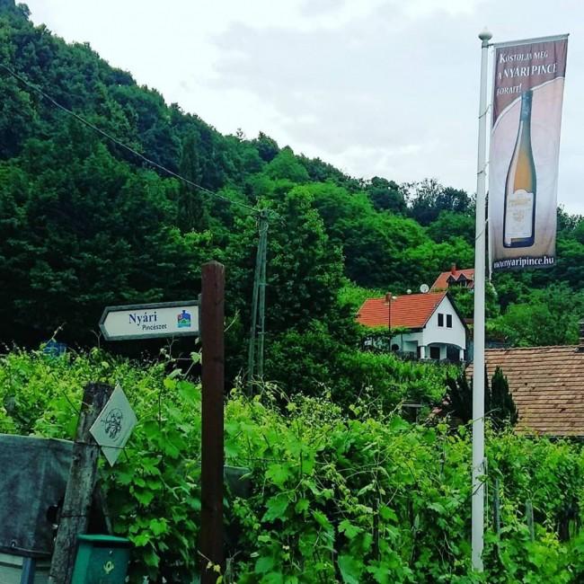 Szent György Borház Nyári Pince, Hegymagas