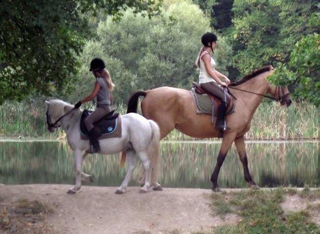 Királyréti lovarda, Szokolya