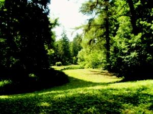 050659_arboretum2.jpg